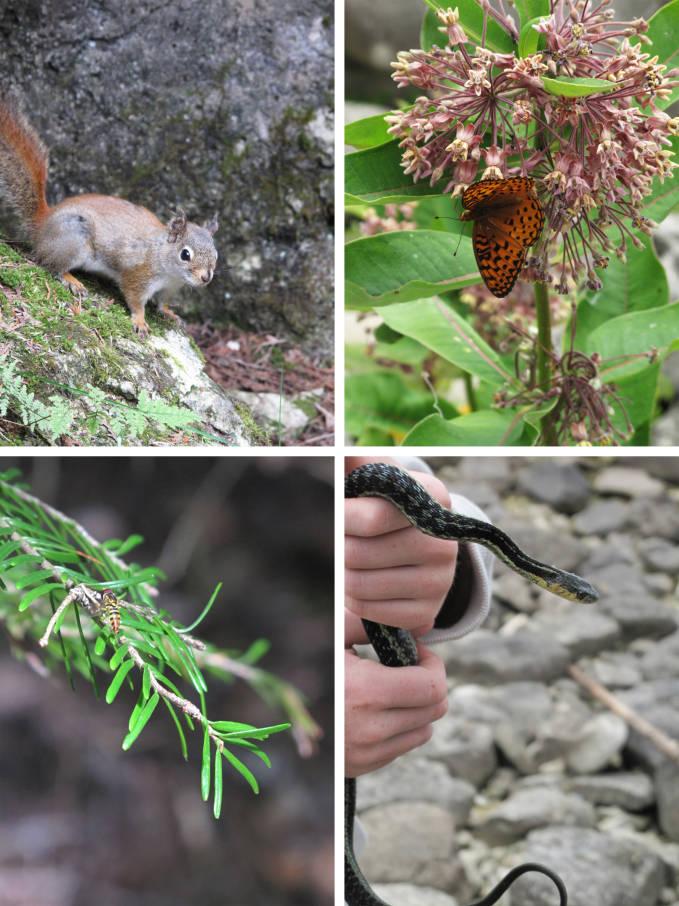 Flowerpot Island animals